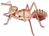 Ant - Product Image