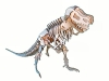 T-Rex - Product Image